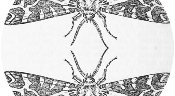 Underground Sounds: Jute Gyte – The Sparrow